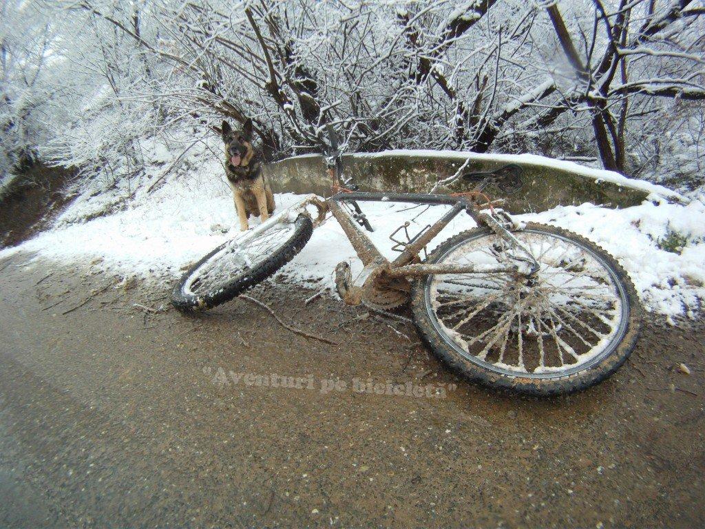 Aventuri pe bicicleta cu cainele pe zapada si noroi la Siria in 2013