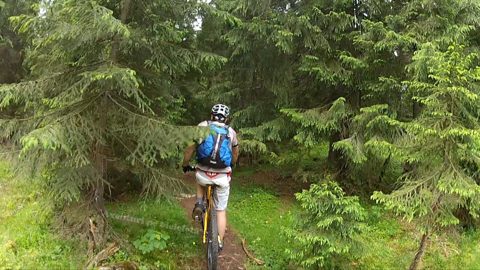 Prin Parcul Natural Apuseni pe traseul Padis – Glavoi – Sudrigiu